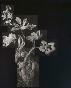 http://wp12222508.server-he.ch/files/gimgs/th-195_195_nature-morte-wurzenpflanzen.jpg