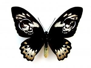 http://wp12222508.server-he.ch/files/gimgs/th-62_62_leichter-als-21-gramm-ornithoptera-aesacus.jpg