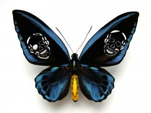 http://wp12222508.server-he.ch/files/gimgs/th-62_62_leichter-als-21-gramm-ornithoptera-priamus-urvillianus.jpg